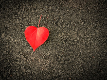 Heart Shaped Leaves On The Floor