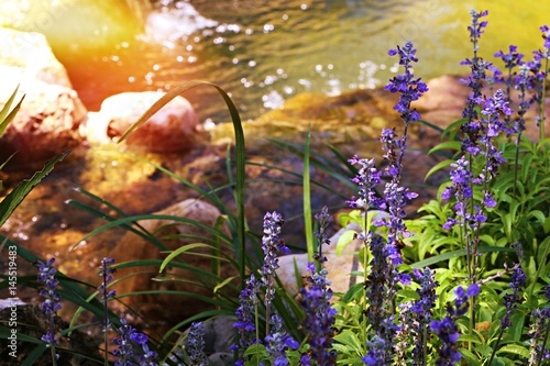 Printed kitchen splashbacks Purple Beautiful fresh garden sunshine day with lavender flowers and waterfall background