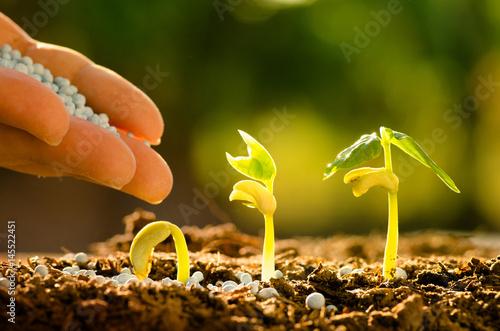 Fotobehang Planten Male hand giving fertilizer to sprout