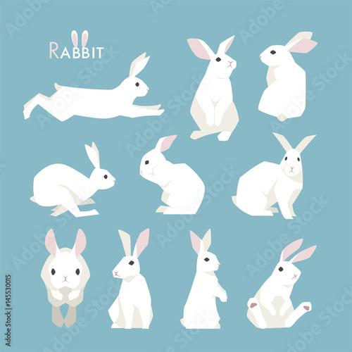 rabbit animal vector illustration flat design Wall mural