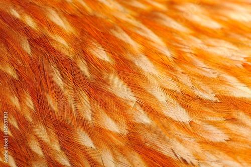 Bird Feathers Macro