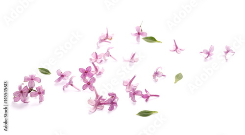 purple lilac flowers and green leaves isolated on white background, texture