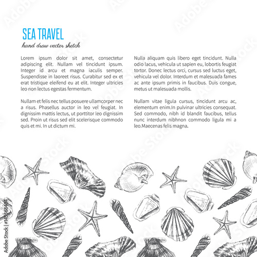 Seashells hand drawn vector etching sketch isolated on white