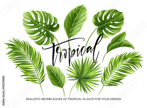 Tropikalni palma liście ustawiają odosobnionego na białym tle. Ilustracji wektorowych