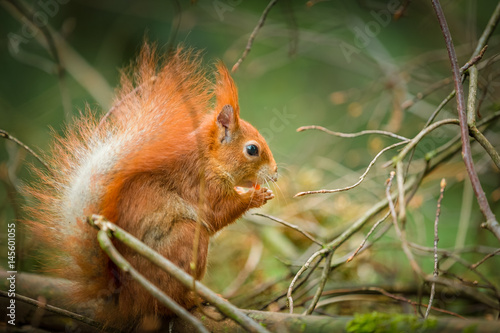Obraz na dibondzie (fotoboard) Natura i zwierzę