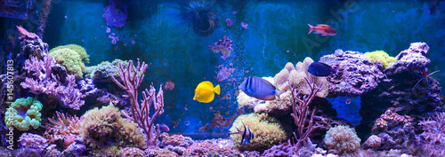Wall Murals Under water Reef tank, marine aquarium. Blue aquarium full of plants. Tank filled with water for keeping live underwater animals. Gorgonaria, Sea Fan. Clavularia. Zoanthus. Zebra apogon. Zebrasoma. Percula.