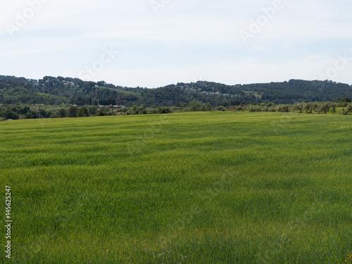 Photo Campos de trigo