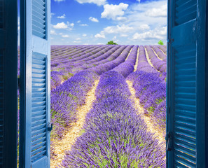 FototapetaLavender field rows with summer blue sky through wooden shutters, France