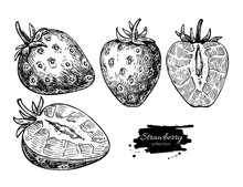 Strawberry Vector Drawing Set....
