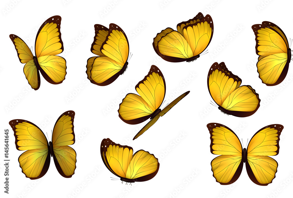 Fototapeta Set colorful isolated butterflies. View Insects Lepidoptera Morpho amathonte Vector illustration