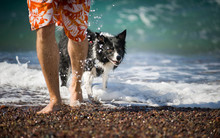 A Man And His Dog (Black And White Border Collie) On The Stone Beach