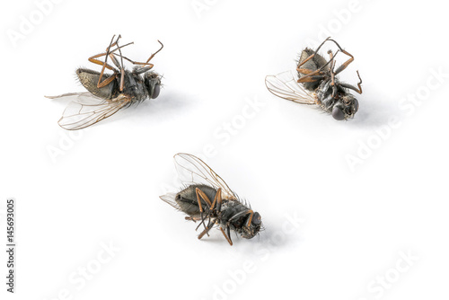 Three dead flies arranged on a white background