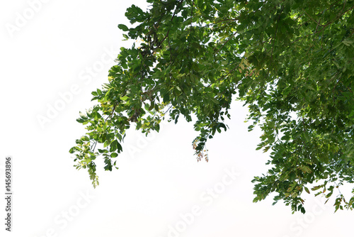 Foto  Foreground of lush trees isolated on white background