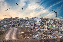 Pollution Concept. Garbage Pile In Trash Dump Or Landfill. Birds Are Flying Around.