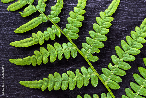 Green leaf texture, fern on black background, sacred geometry in nature, fractal natural pattern