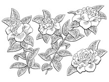 Gardenia Flower Branch Graphic...