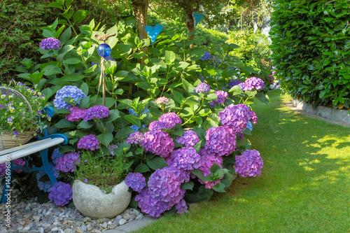 Foto op Canvas Hydrangea Hortensien im Garten