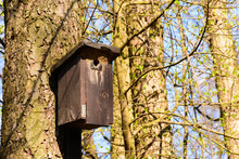 Bird Booth Hung On A Tree