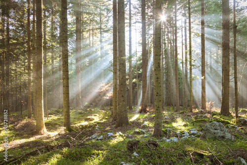 Fototapeta  Morning sun rays in forest tree landscape.