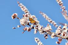 Beyaz çiçekler üzerinde Kel...
