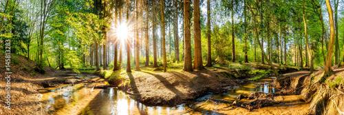 Plakat Las na wiosnę, panorama krajobrazu z drzewami, strumieniem i słońcem