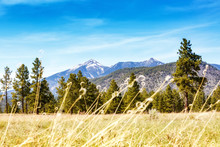 Flagstaff Field With Pines And Mountains