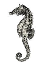 Vintage Animal Engraving / Drawing: Seahorse Or Hippocampus - Ocean Vector Design Element