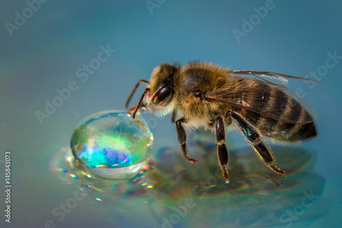 Recess Fitting Bee Macro image of a bee on a reflective surface drinking a honey drop from a hive