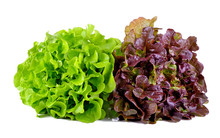 Green And Red Lettuce Isolated...