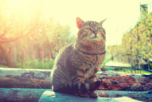 Happy Cat Sitting On Logs In A Garden At Sunset. Cat Enjoying Spring And Warm Weather