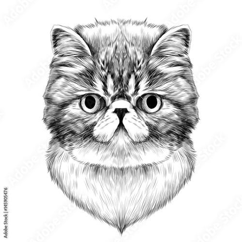 Photo sur Toile Croquis dessinés à la main des animaux cat breed Exotic Shorthair face sketch vector black and white drawing