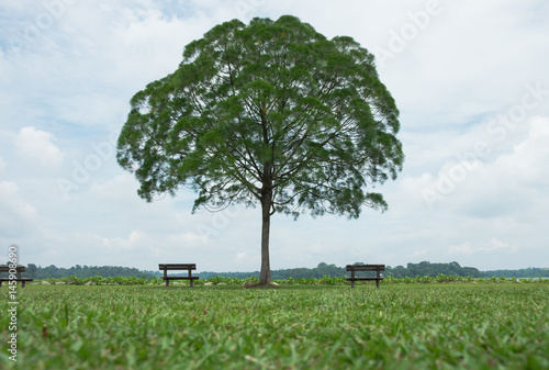 Photo  lone tree in green meadow have bench both sides them blue sky and clouds backgro