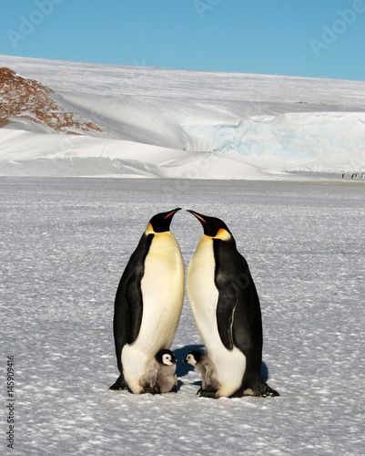 Foto op Canvas Antarctica Emperor penguin chick. Close-up