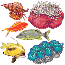 Reef Animals Set