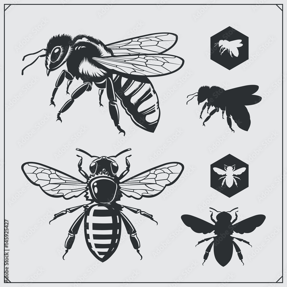 Fotografie, Obraz Set of honey emblems and design elements