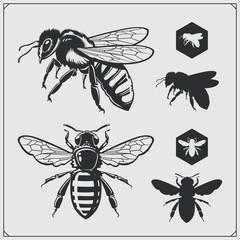 Set medenih amblema i elemenata dizajna. Saće, pčelinje siluete.