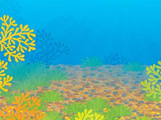 Fototapeta na wymiar Tropical coral reef