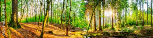 Papiers peints Forets Idyllischer Wald mit Bach und Sonne