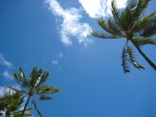 Palm Trees In The Sky 2