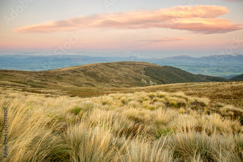 Obraz na plátne Sunset over tussock meadow, Kepler track, New Zealand