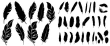 Vector, Silhouette Of Bird Fea...