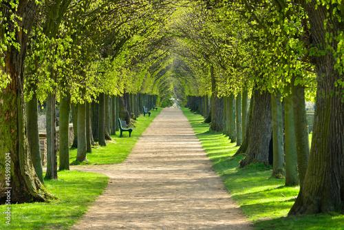 Park mit Lindenallee im Frühling, erstes frisches grünes Laub Canvas Print