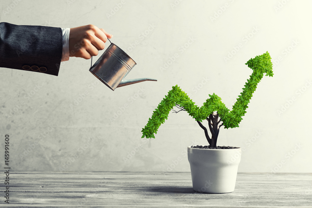 Fototapeta Concept of investment income and growth with tree in pot