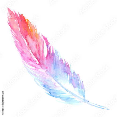 Watercolor Pink Purple Blue Bird Rustic Feather Isolated