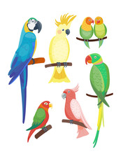 Cartoon Tropical Parrot Wild A...