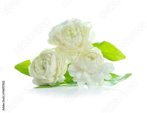 arabian jasmine, jasminum sambac, flower and leaves, jasmine tea flower isolated Canvas Print