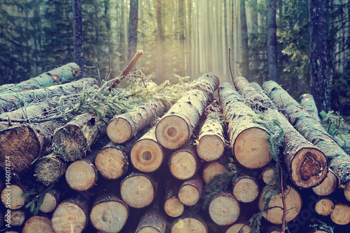 Pile of wood logs stumps in a forest with trees Poster Mural XXL