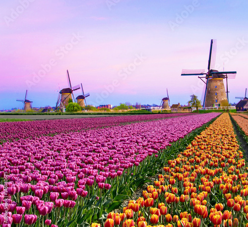 Montage in der Fensternische Flieder Magical fairy fascinating landscape with windmills middle tulip field in Kinderdijk, Netherlands, Europe at dawn. (Meditation, anti-stress, Harmony - concept)