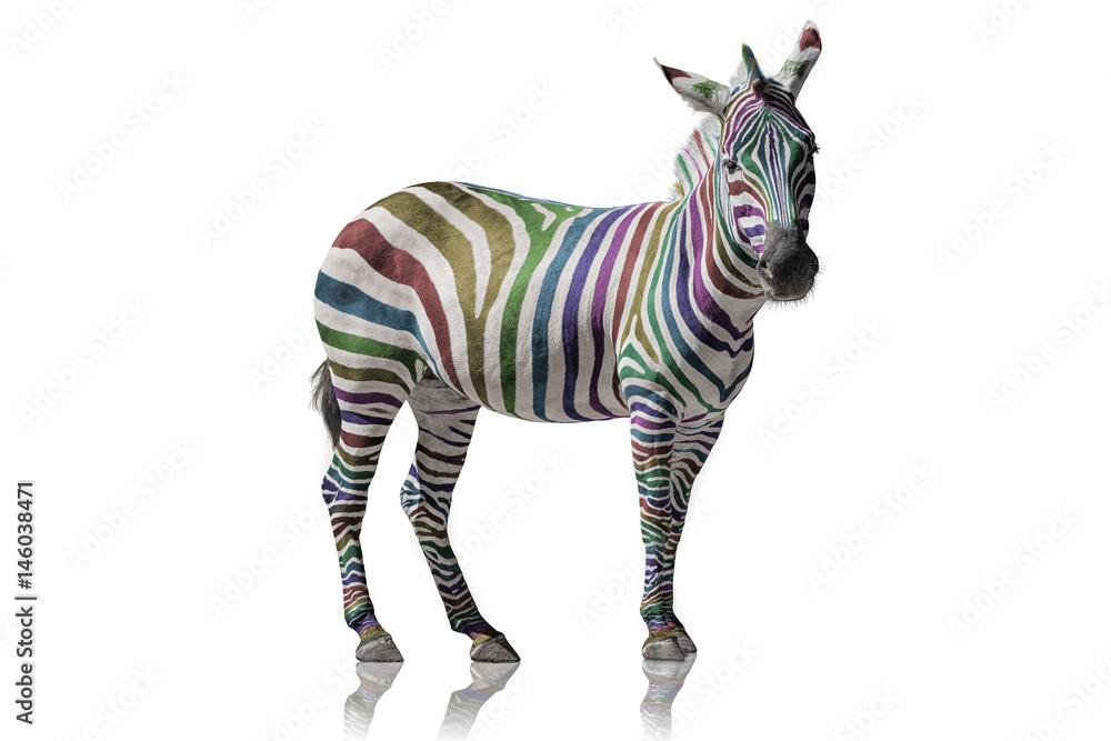 Fototapety, obrazy: Regenbogen Zebra