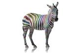 Fototapeta Zebra - Regenbogen Zebra